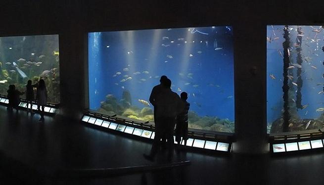 clasica  Música de piano entre peces para frenar la contaminación de los mares